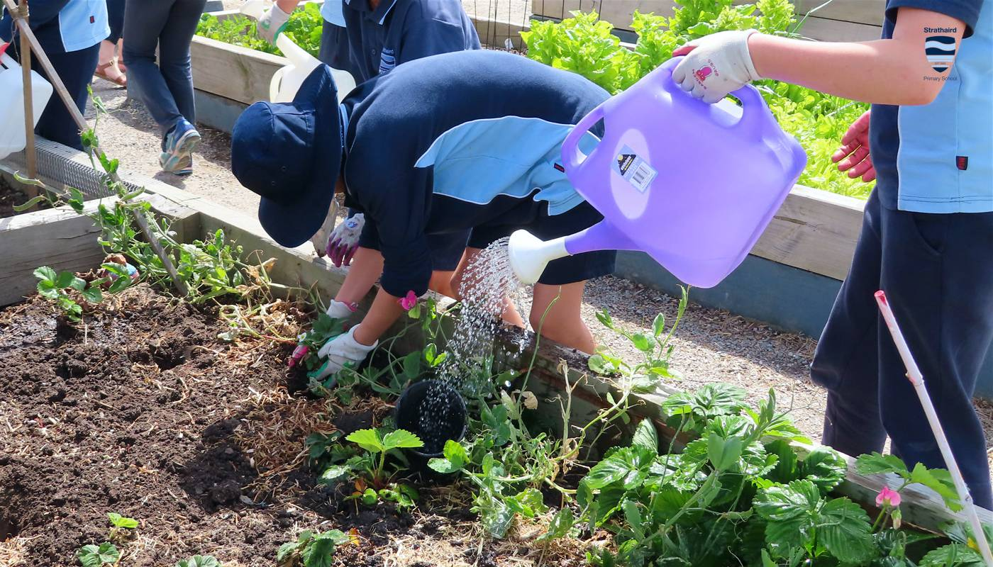 Sustainability - Strathaird Primary School Narre Warren South